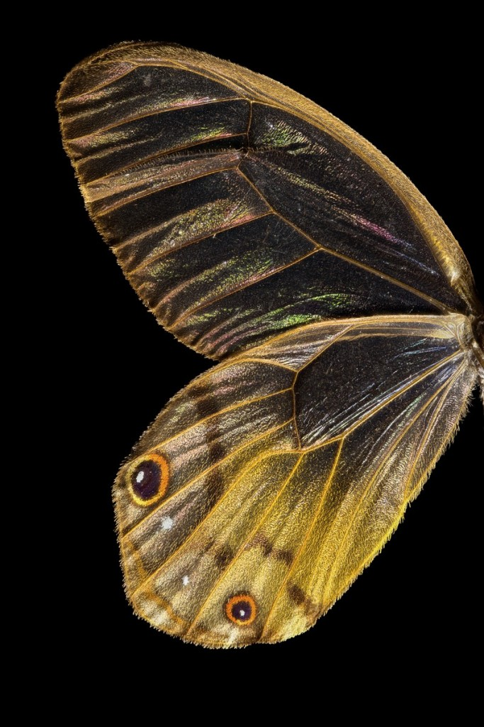 butterfly_full_stack_edit_2-Edit
